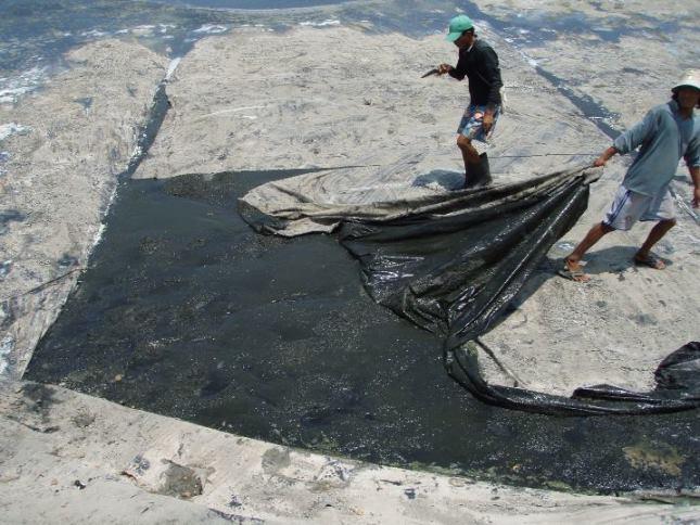 Hình ảnh ao nuôi tôm bị ảnh hưởng của khí độc H2S