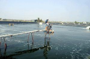 Chất lượng nguồn nước trong ao nuôi tôm là rất quan trọng