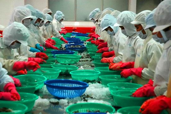 VASEP: Xuất khẩu tôm Việt Nam sang Hàn Quốc thuận lợi từ FTA