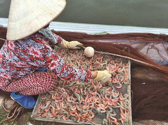 Long An: Huyện Cần Giuộc có 160ha tôm nhiễm bệnh