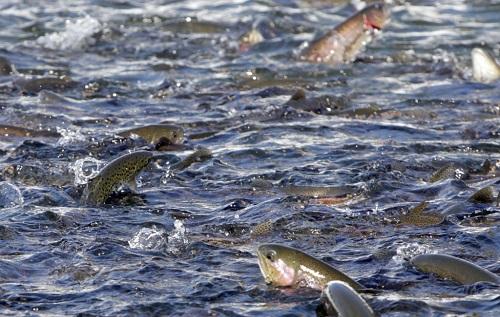 Vài nét về ngành nuôi trồng thủy sản tại EU
